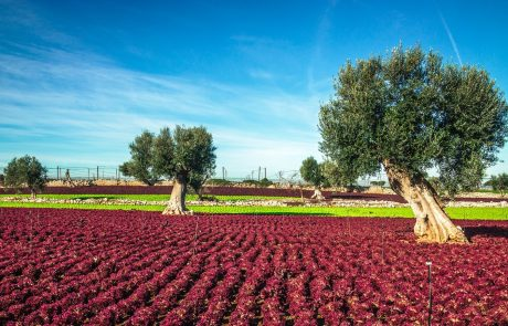 The beautiful and colorful landscapes in Puglia